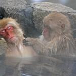 Takasakiyama, la montaña de los monos