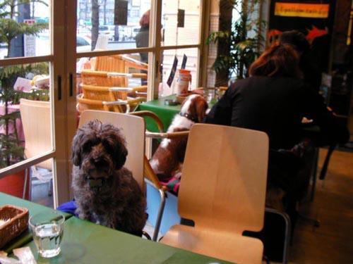 Dog Café, no dejes fuera a tu perrito