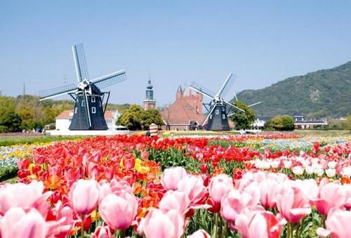 Festival de Tulipeanes en Huis ten Bosch