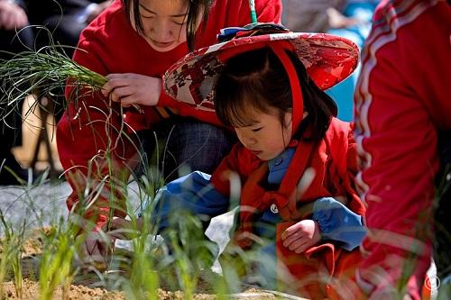 El Festival de Otaue, un festival de arroz en junio