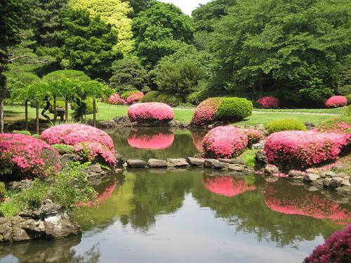 Shinjuku Gyoen, hermoso parque en Tokio