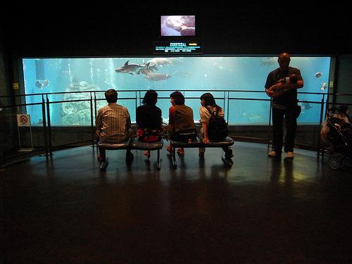 acuario de toba