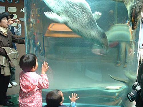 Zoologico de Asahiyama