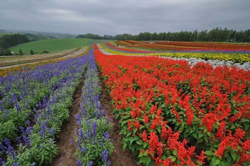 Las rutas panorámicas de Biei, en Hokkaido