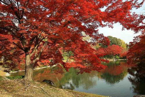 Los jardines del Palacio Imperial Sento, en Kyoto