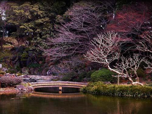 primavera en japon
