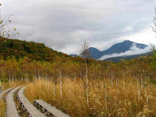 senjogahara