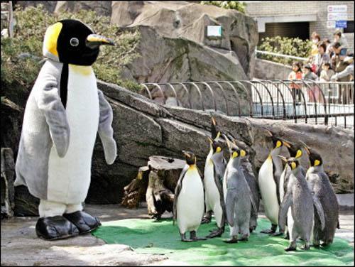 ueno zoo 2
