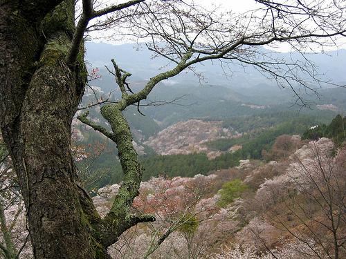 yoshinoyama 2